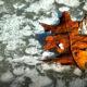 liść na lodzie